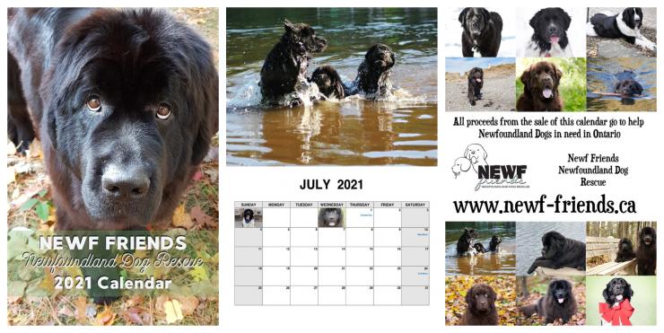 2021 Newf Rescue Calendar