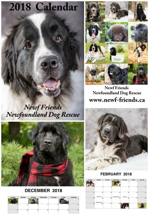 2018 Newf Rescue Calendar