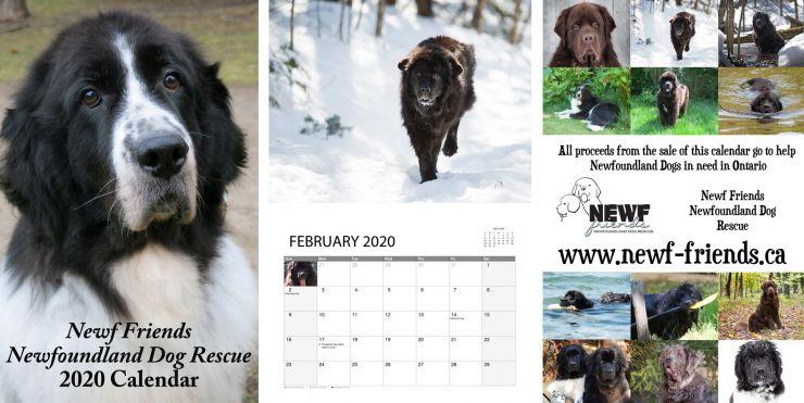 2020 Newf Rescue Calendar