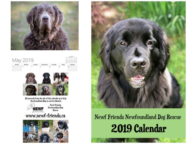 2019 Newf Rescue Calendar